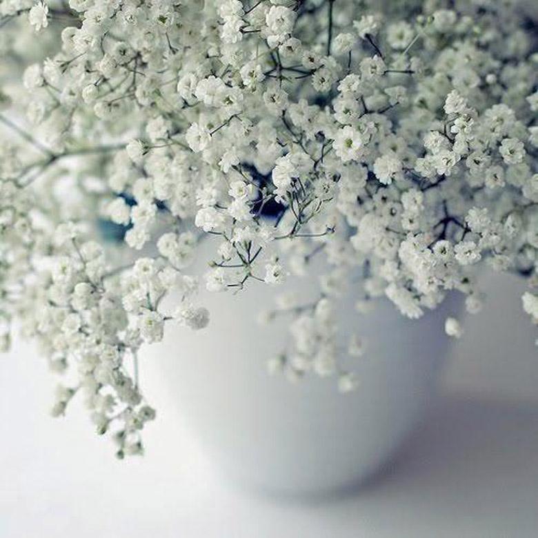 paniculata-flor